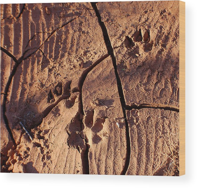 Photography Wood Print featuring the photograph Desert Paw Prints by Heather S Huston