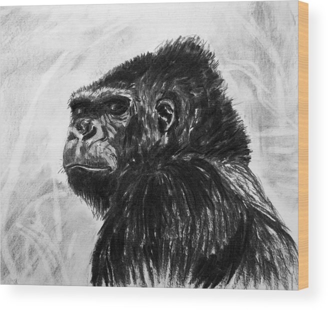 Gorilla. Animal Natural History. Charcoal. Wood Print featuring the painting Gorilla by John Cox