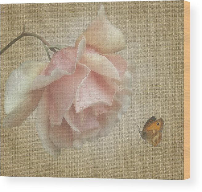 Rose Wood Print featuring the digital art Pale Rose by Marrissia Ruth