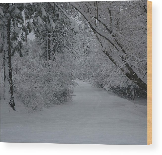 Snow Canopy Wood Print featuring the photograph Road Out by Nancy Rohrig