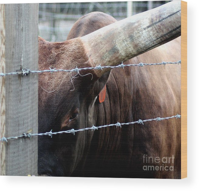 Bull Wood Print featuring the photograph Guarding The Fence V2 by Lauren Nicholson