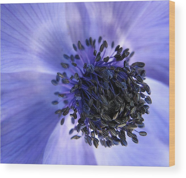 Flowers Wood Print featuring the photograph Purple Seed Haze by Suzy Piatt