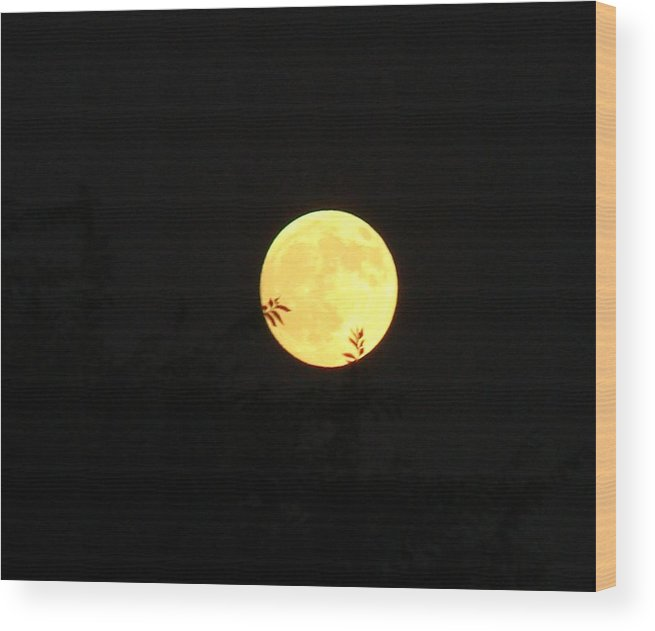 Full Moon Wood Print featuring the photograph Full Moon August 2008 by Liz Vernand