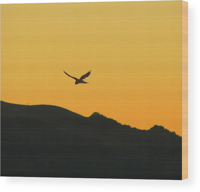 Sunset Wood Print featuring the photograph Hang Time by Kathy Roncarati