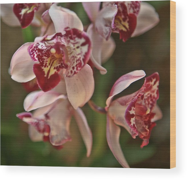 Flowers Wood Print featuring the photograph Pink Orchid by Liz Santie