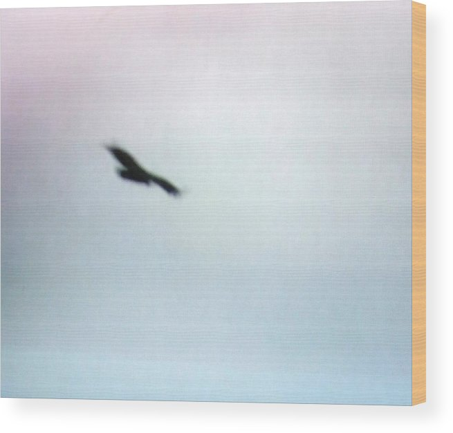 Hawk Wood Print featuring the photograph The Hawk by Rana Adamchick