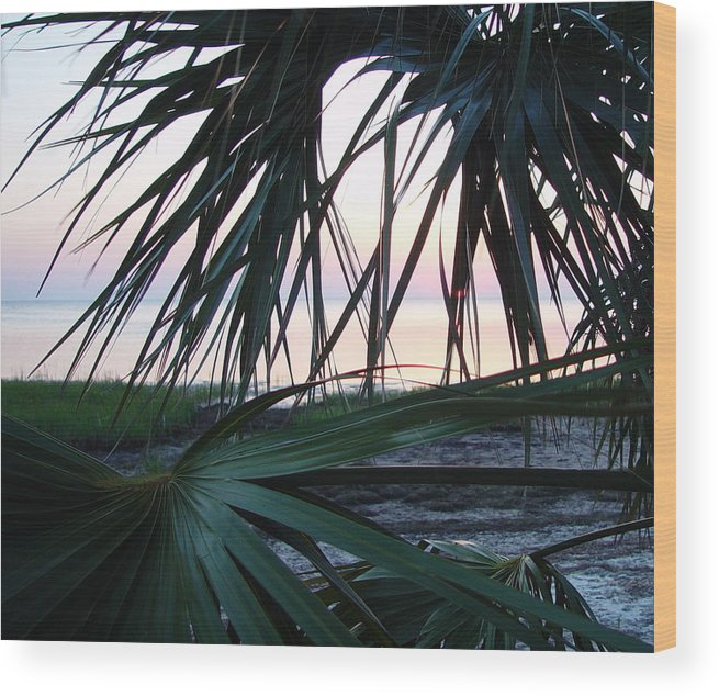 Palms Wood Print featuring the painting The Peeking Palms by Debbie May