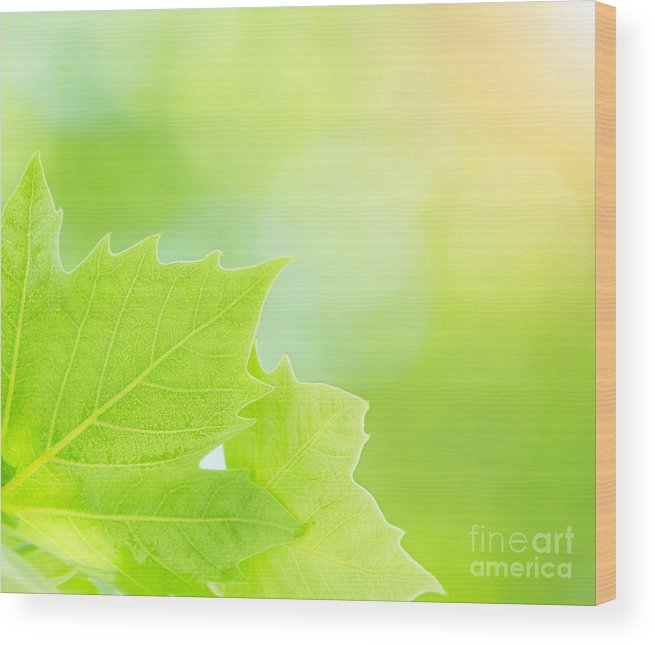 Abstract Wood Print featuring the photograph Fresh Green Tree Leaves by Anna Om