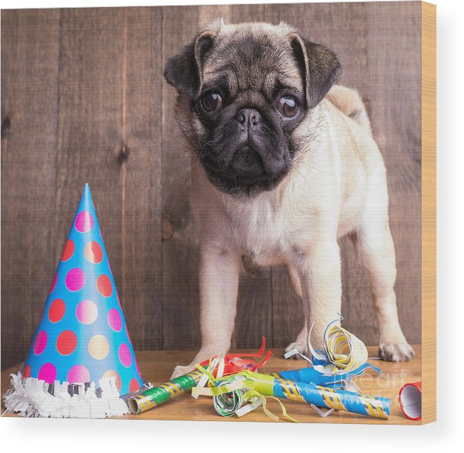 Dog Wood Print featuring the photograph Happy Birthday Cute Pug Puppy by Edward Fielding