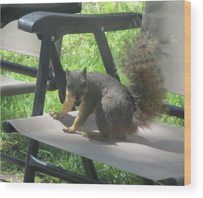 Squirrel Wood Print featuring the photograph Mr. Squirrel Relaxing by Donna Wilson