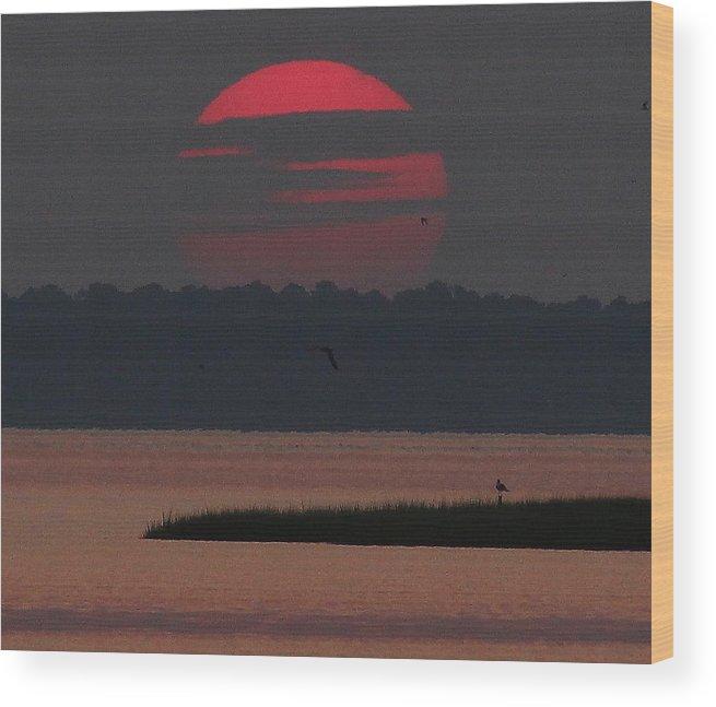 Orange Wood Print featuring the photograph Orange Glow by David Jones
