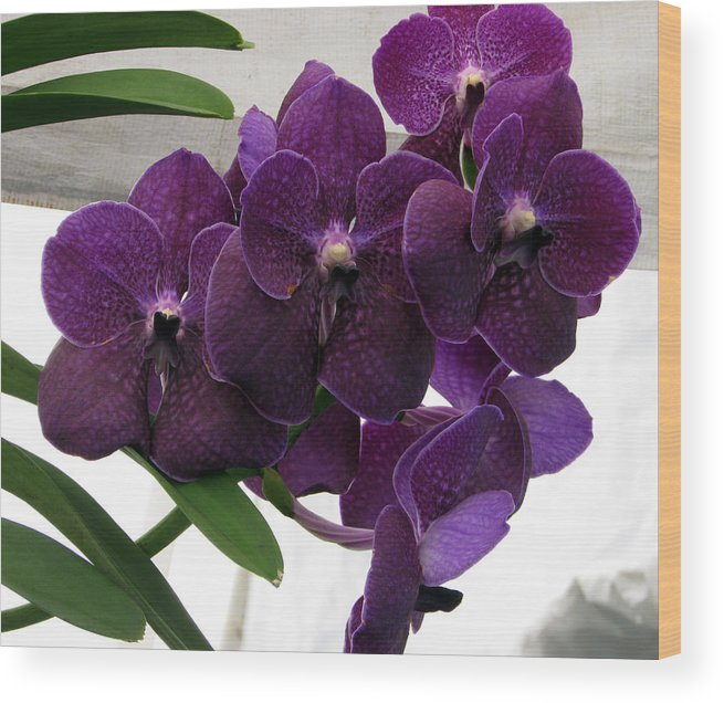 Purple Orchid Wood Print featuring the photograph Purple Me Not by Debi Singer