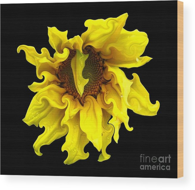 Sunflowers Wood Print featuring the photograph Sunflower With Curlicues Effect by Rose Santuci-Sofranko