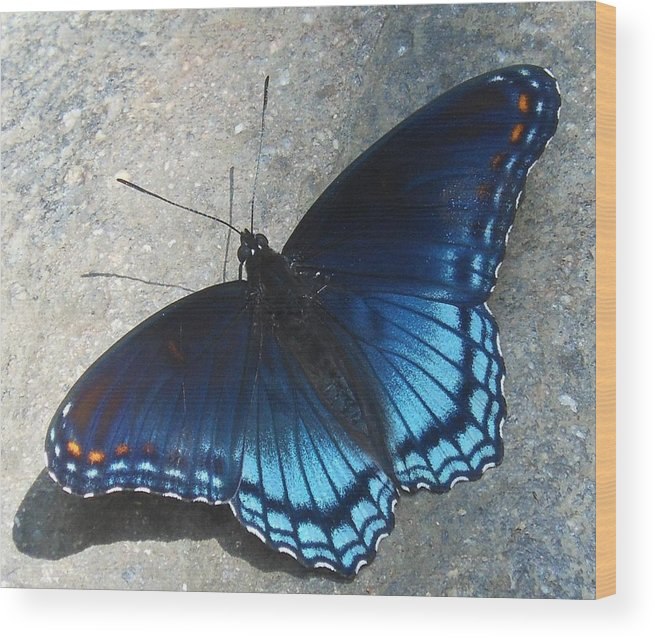 Butterfly Wood Print featuring the photograph Smoky Mountain Butterfly by Linda Labadorf