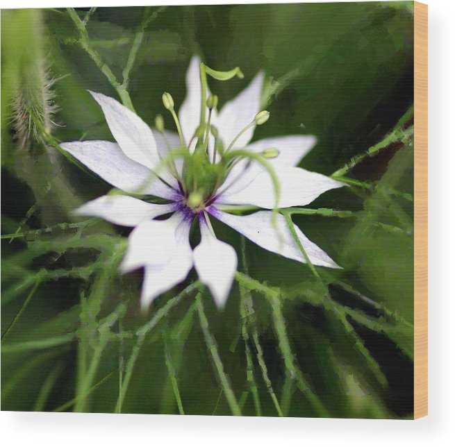 Love In A Mist Wood Print featuring the photograph Nigellesque by Shiladitya Sinha