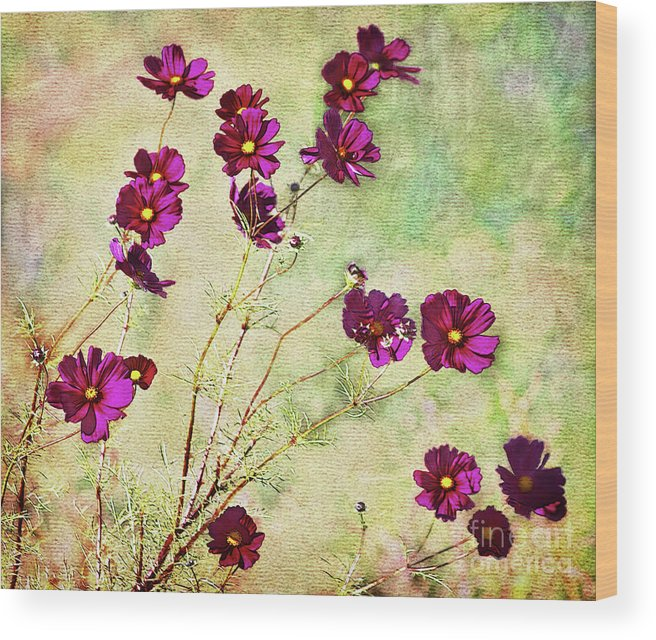 Flowers Wood Print featuring the photograph Summer Cosmos by Susan Isakson