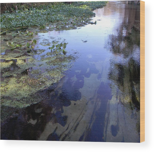 River Wood Print featuring the photograph Wekiwa River Reflections by Christy Usilton