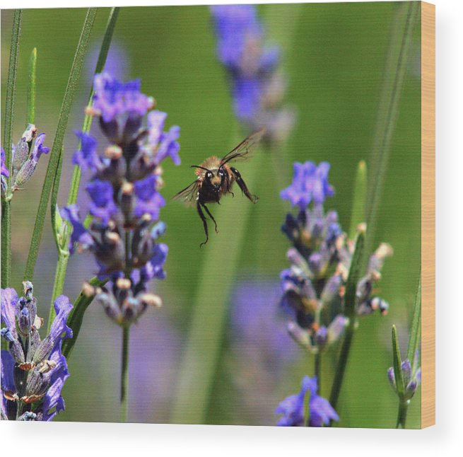 Flora Wood Print featuring the photograph Your Next by Joe Schofield