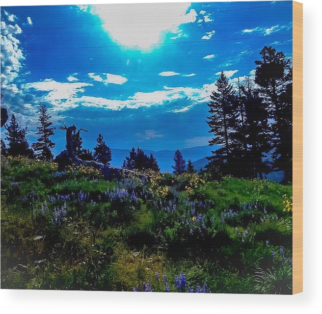 Wood Print featuring the photograph Austere Aspirations by Dan Hassett