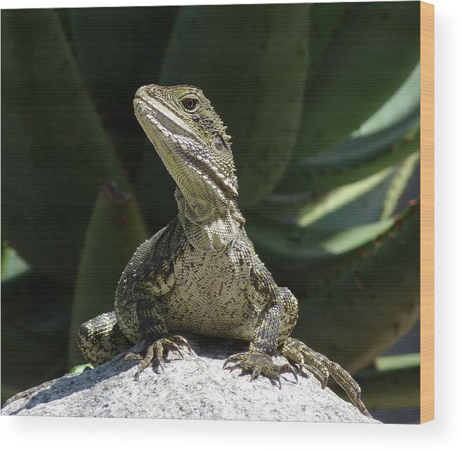 Eastern Watern Dragon Wood Print featuring the photograph Eastern Water Dragon by Margaret Saheed