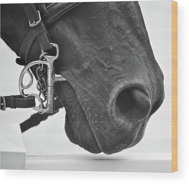 Horse Wood Print featuring the photograph Kentucky Boy by Donna Shahan