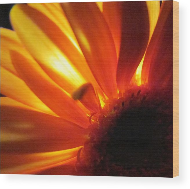 Orange Gerber Daisy Wood Print featuring the photograph Magical by Ginger Adams