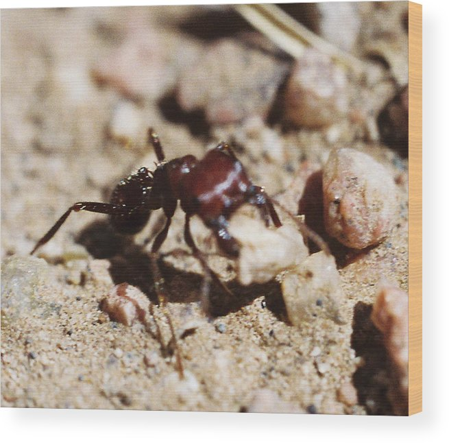 Ant Wood Print featuring the photograph Out Of My Way by Mike Burton