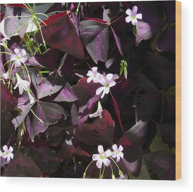 Flowers Wood Print featuring the photograph Purple Leaves With Tiny Pink Flowers by Stephanie H Johnson