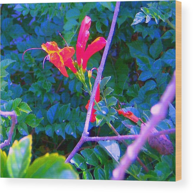 Florals Wood Print featuring the photograph Floral 5 by Dan Twyman