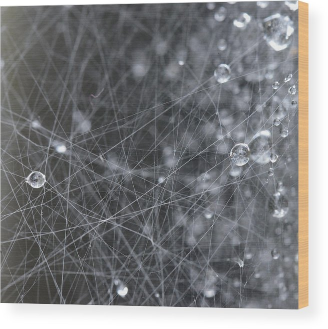 Spider Wood Print featuring the photograph Morning Dew by Ian Ashbaugh