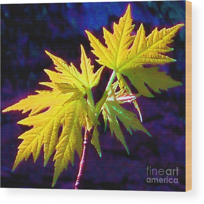 Leaves Wood Print featuring the photograph New Growth by Tahlula Arts