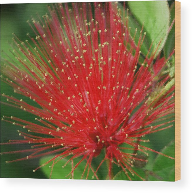 Flowers Wood Print featuring the photograph Flower Optics 3 by Debbie May