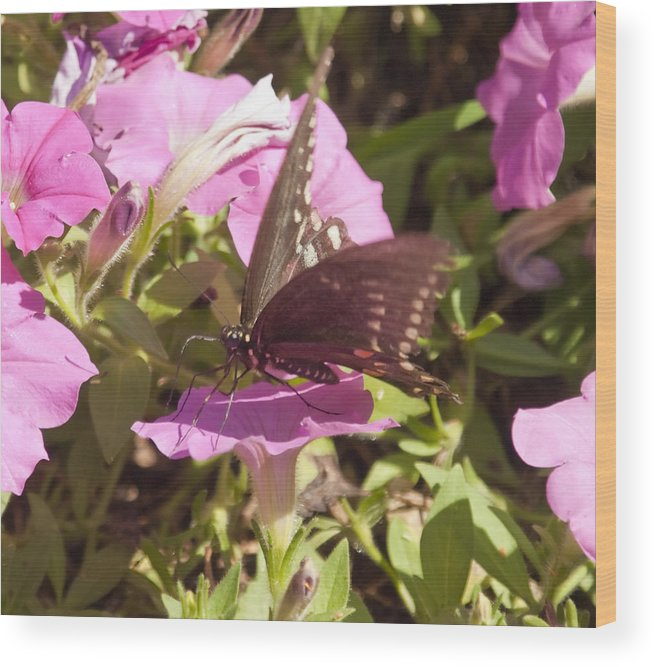 Butterfly Wood Print featuring the photograph Swallowtail by Steve Kenney