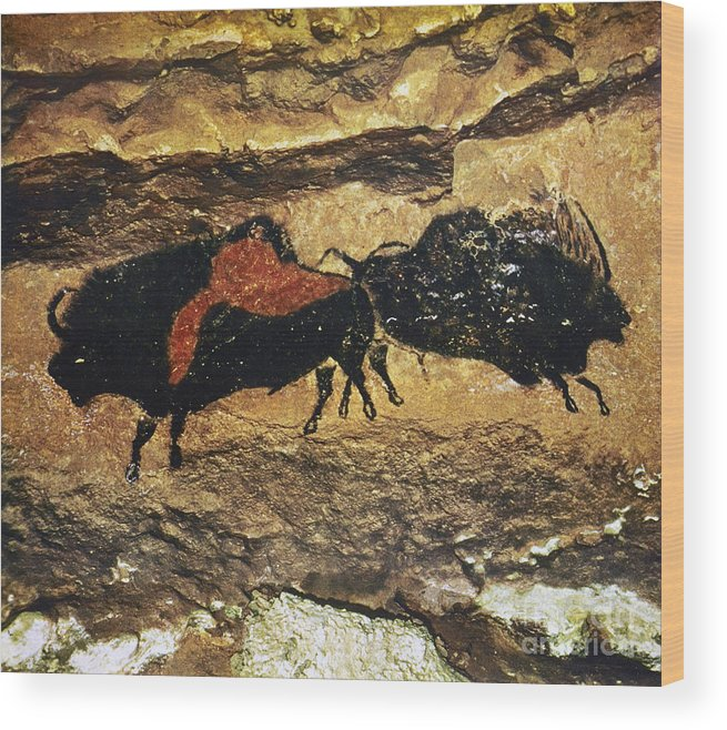 15000 Wood Print featuring the photograph Cave Art: Bison by Granger