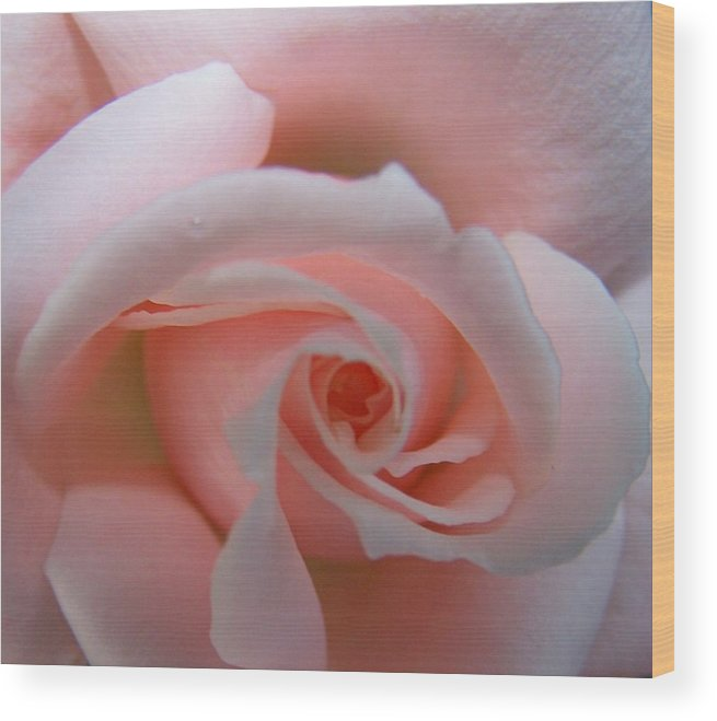Pink Wood Print featuring the photograph I Love Pink by Vijay Sharon Govender