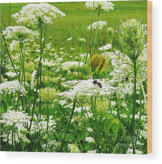 Queen Anne's Lace Wood Print featuring the photograph Queen Anne's Lace by Stephanie Forrer-Harbridge