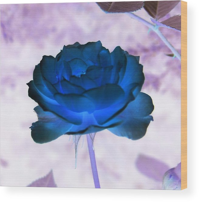 Abstract Wood Print featuring the photograph Rose In Full Bluem by Erika Lesnjak-Wenzel