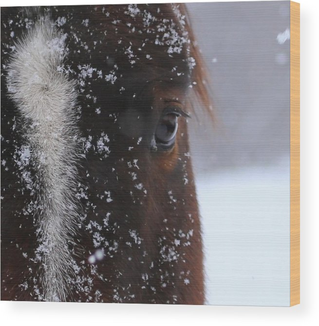 Wood Print featuring the photograph Eye On You by David Baer