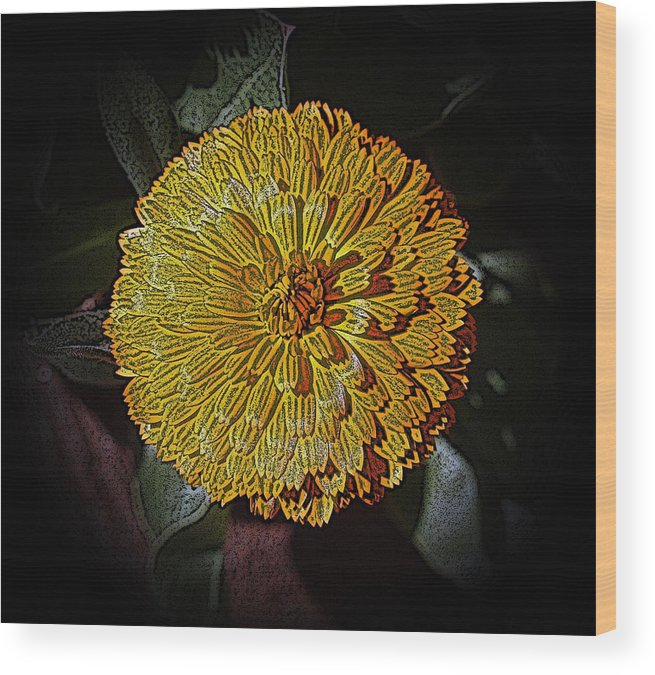 Marigold Wood Print featuring the photograph Marigold Digitized by Louise Mingua