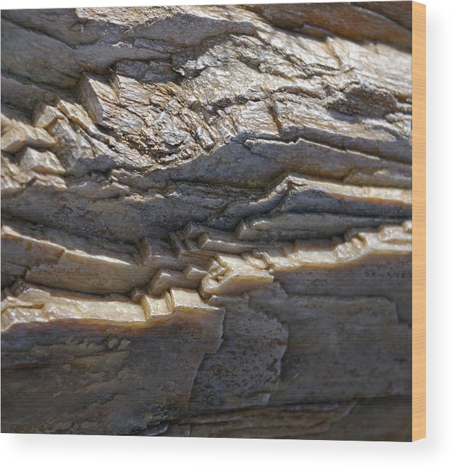 Petrified Wood Print featuring the photograph Petrified Wood by Christine Burdine