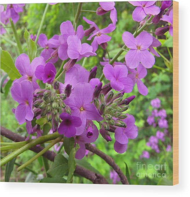 Wild Flowers Wood Print featuring the photograph Purple Popping 2 by Cedric Hampton