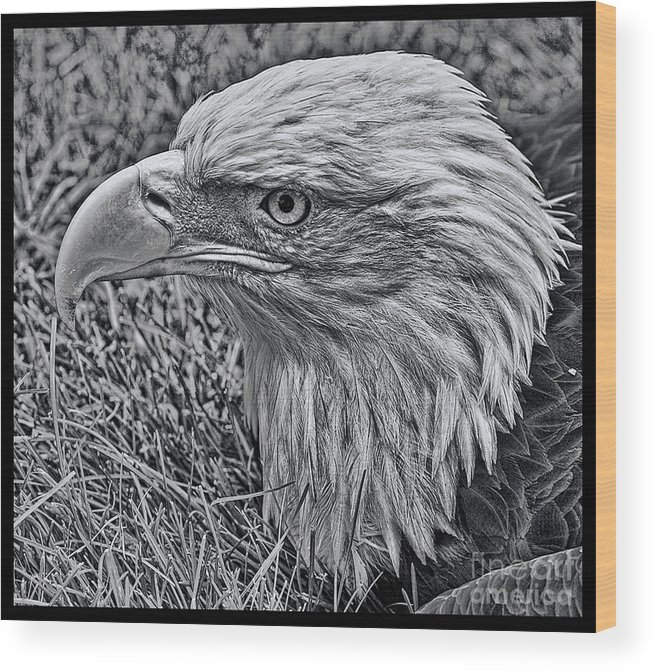 Bald Eagle Wood Print featuring the photograph The Thinker by Tommy Anderson