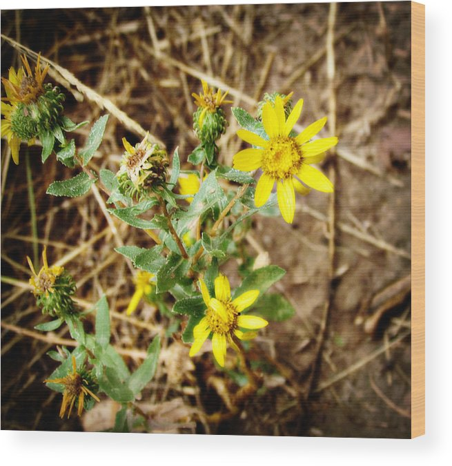 Wildflowers Wood Print featuring the photograph Wild Flowers by Carol Kristensen