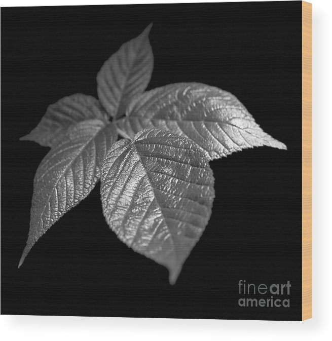 Plant Wood Print featuring the photograph Leaves by Tony Cordoza