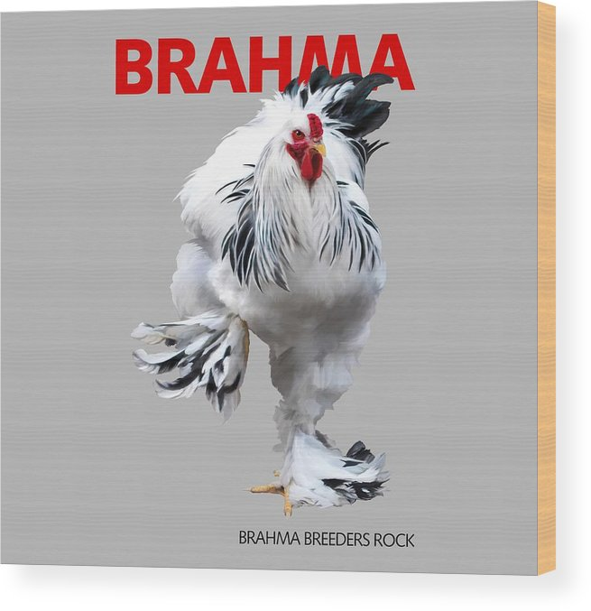 Brahma Wood Print featuring the digital art Brahma Breeders Rock Red by Sigrid Van Dort
