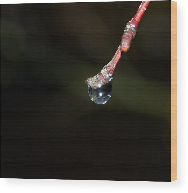 Raindrop Wood Print featuring the photograph Crystal Raindrop by Marilynne Bull