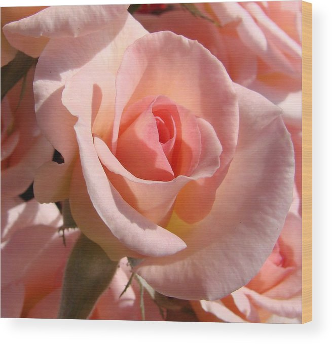 Pink Wood Print featuring the photograph Pink Roses by Liz Vernand