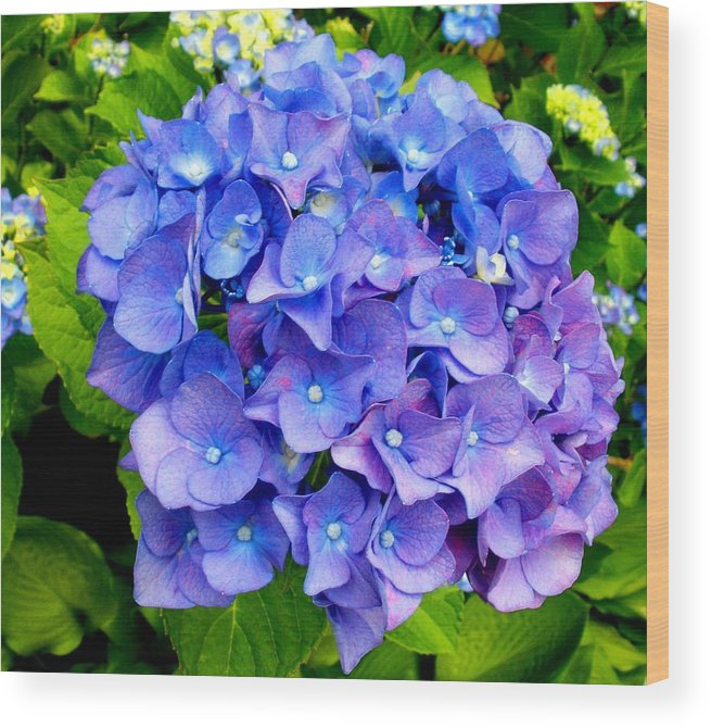 Floral Wood Print featuring the photograph Purple Hydrangea by Freda Sbordoni