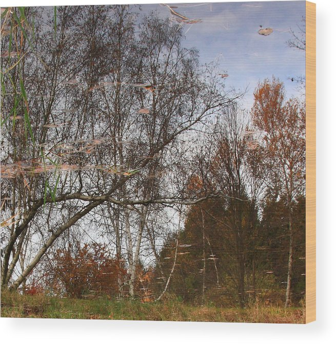 Nature Wood Print featuring the photograph Rheinstrom Trees With A Twist by Larry Federman