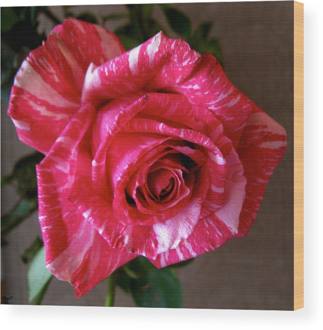 Roses Are Red Right Wood Print featuring the photograph Roses Are Red Right by Debra   Vatalaro